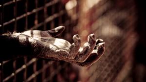 hand-of-chimp