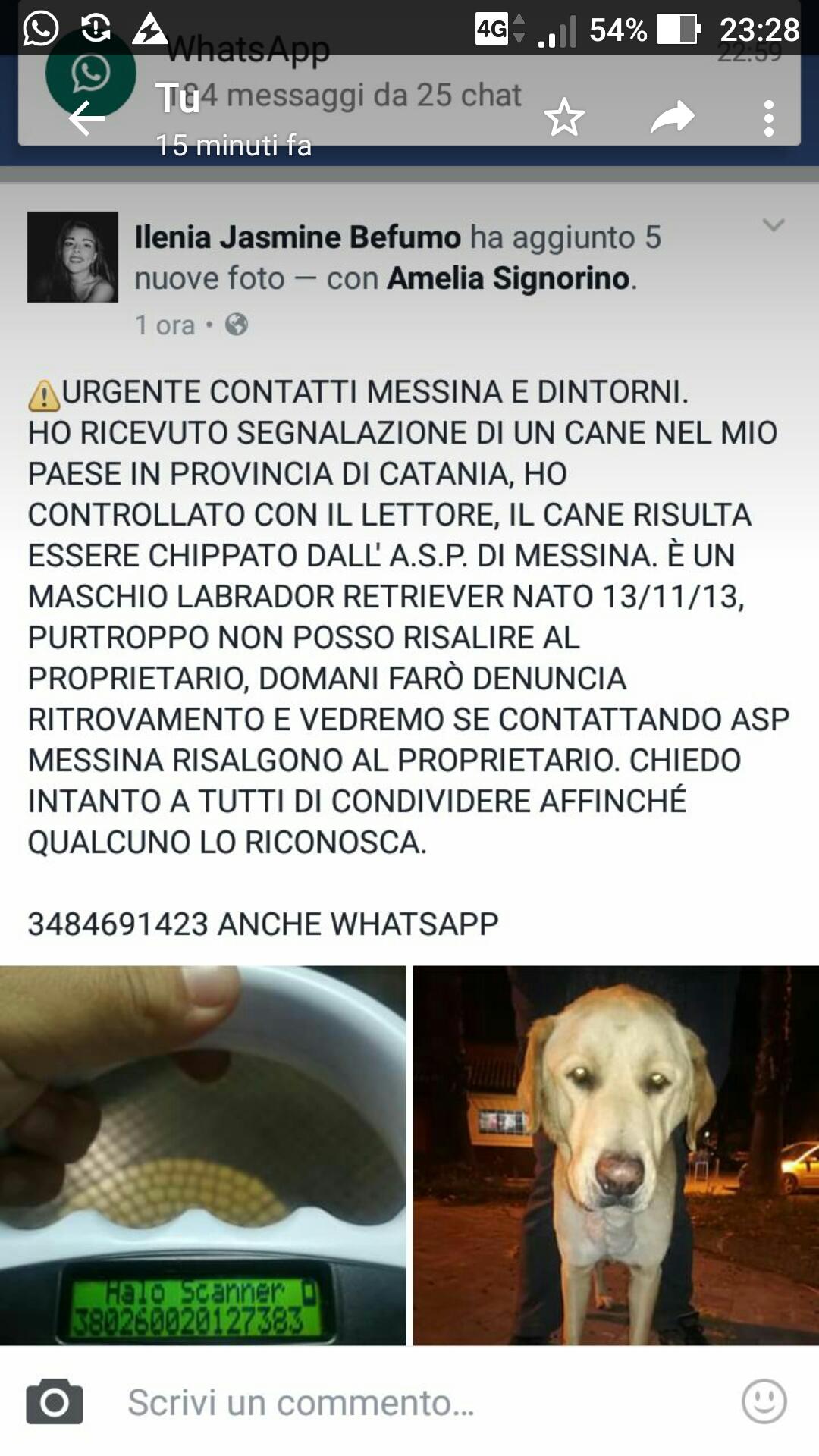 RICONSEGNATO AI PADRONI!!! Trovato in provincia di Catania ma con microchip messinese