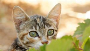 Little Kitten Playing Hide and Seek