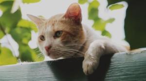 cat-2527494_1920-kqah-u1101206007339076g-1024x576lastampa-it