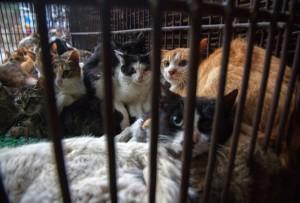 gatti-maltrattati