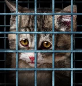gattino-e1489498851907