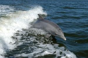 delfino-640x422