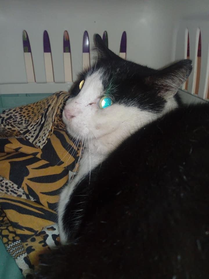 Messina 11 novembre 2018: trovato gatto pressi mercato S. Orsola
