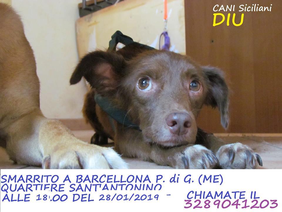TROVATO!!!!! Barcellona Pozzo di Gotto (ME) -SMARRITO!!!!-