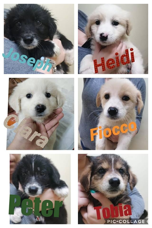Messina, cuccioli abbandonati a Ponte Schiavo: cercano casa