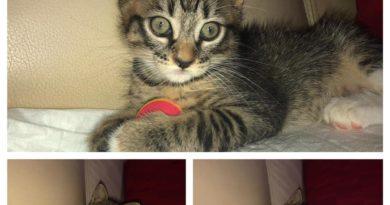 Messina:Pupa gattina di due mesi cerca casa
