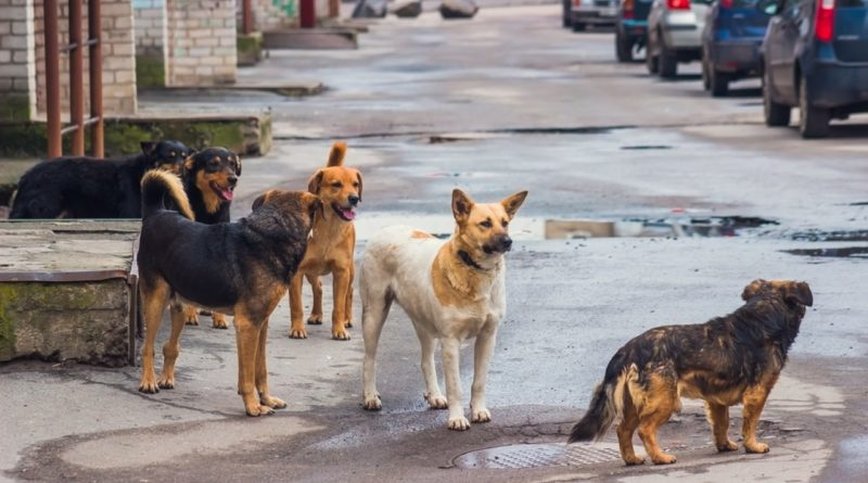 https://www.lastampa.it/la-zampa/cani/2019/09/11/news/cassazione-incidenti-stradali-l-asl-paga-i-danni-causati-dai-cani-randagi-1.37437885