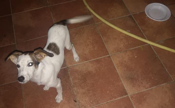 MESSINA:Faro Superiore-Vi presentiamo Leila, una dolce cagnolina simil jackrussel, taglia medio piccola cerca casa!!!!!