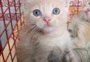 MESSINA:PUMA cerca casa magnifico gattino maschietto arancione cipria