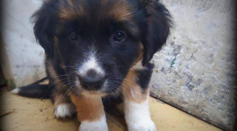 """Messina:""""Ciao, mi chiamo Emma , ho poco più di 1 mese e sono una cagnolina dolcissima"""
