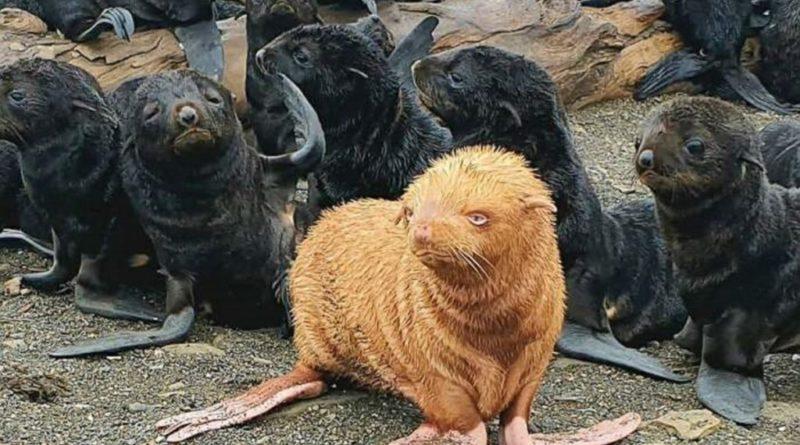 https://www.greenme.it/informarsi/animali/foca-albina-russia/