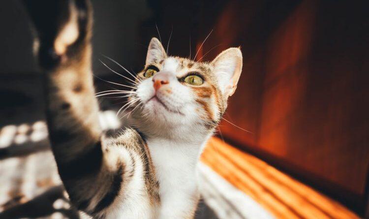 https://www.amicidichicco.it/cat-lifestyle/il-tuo-gatto-attacca-post-it-e-tu-non-lo-sai/?fbclid=IwAR11f9t8O38fivrYNcYCqcaF8jo8eYeoCGImmYMzepmoGRPXGV1BqhRytF0