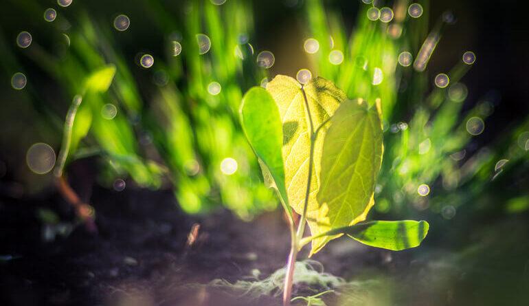 https://rivistanatura.com/il-segreto-senso-musicale-delle-piante/?fbclid=IwAR1zl1TS5gXLped880vItK_QEKoagAgMh6IDCdhDAELVpDv_PtJMozpcm04