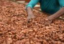 https://www.greenme.it/vivere/costume-e-societa/causa-sfruttamento-minorile-cacao/?fbclid=IwAR1tboHMuDYkm42s113DB0RoOMS9eK4fWvadlnC4qnxMoswUz6EI8yXJTFQ