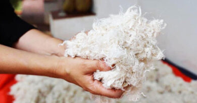 https://www.vegolosi.it/news/lana-vegana-vegan-wool/?utm_medium=Echobox&utm_source=Facebook&fbclid=IwAR1S2GAlv-5tDeWOhFzfoW4vQO8nG_d2WEakMfz2KLDycPUr-UYZ3fBlX3Y#Echobox=1618124012