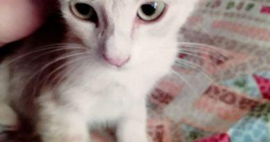 prov. MESSINA : Maschio, 3 mesi cerca casa