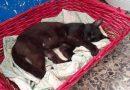 MESSINA: Pluto, gatto di circa due anni super coccolone cerca casa!!!!