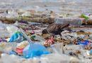 https://www.greenme.it/informarsi/ambiente/plastica-oceani-allarme-ambientalisti/?fbclid=IwAR0Ti9Mbr_XldBOxCyazfZPQHHNW8niagYOCo3ELx8_KdL8hYwdsCwQ1qNU